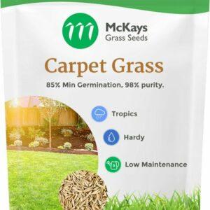 Carpet Grass Seed