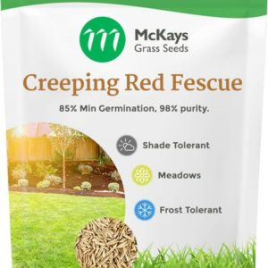 Creeping Red Fescue Seed