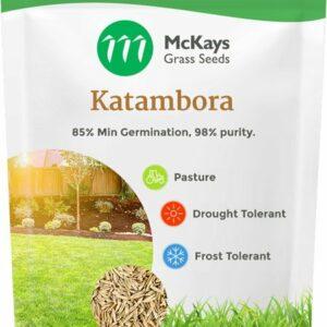 Katambora Rhodes Grass