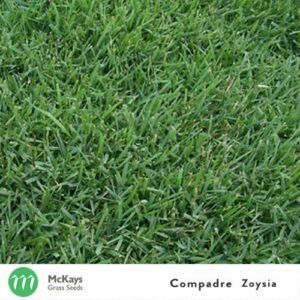 compadre zoysia grass seed