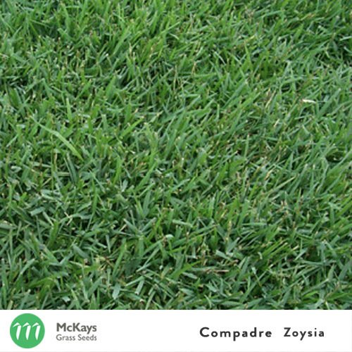 Queensland Blue Couch Mckays Grass Seeds