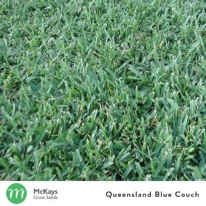 queensland blue couch grass seed