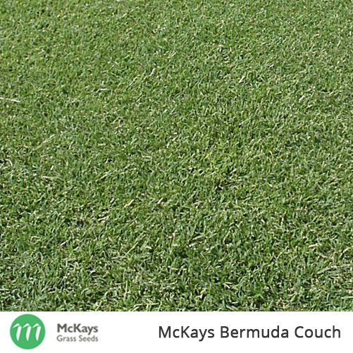 Fabulous Buy Bermuda Couch Seed From Australia Leading Grass Seed Machost Co Dining Chair Design Ideas Machostcouk