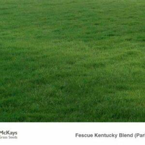 Parks Blend Kentucky Fescue blend